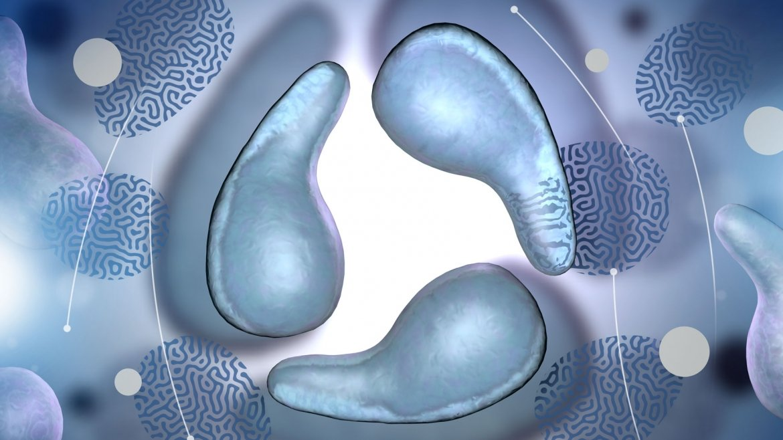 All You Should Know About Mycoplasma Genitalium